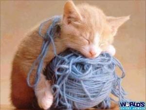 Kitten sleeping on a ball of yarn