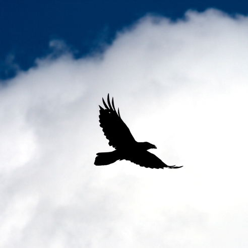The Raven Who Spoke to God
